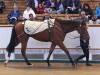 Cloudberry whose 310000gns sale was a good profit on the 15000gns paid for him by Roger Charlton here in July