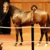 Yearling ed pic
