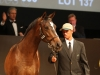 Sheikh Fahad's purchase the R45 million colt by Captain Al